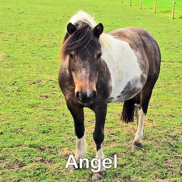 coaster-angel