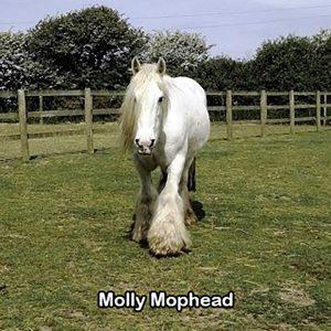 Molly Mophead